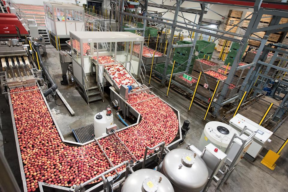Thousands of apples passing along the company's production line (Camellia / PA)