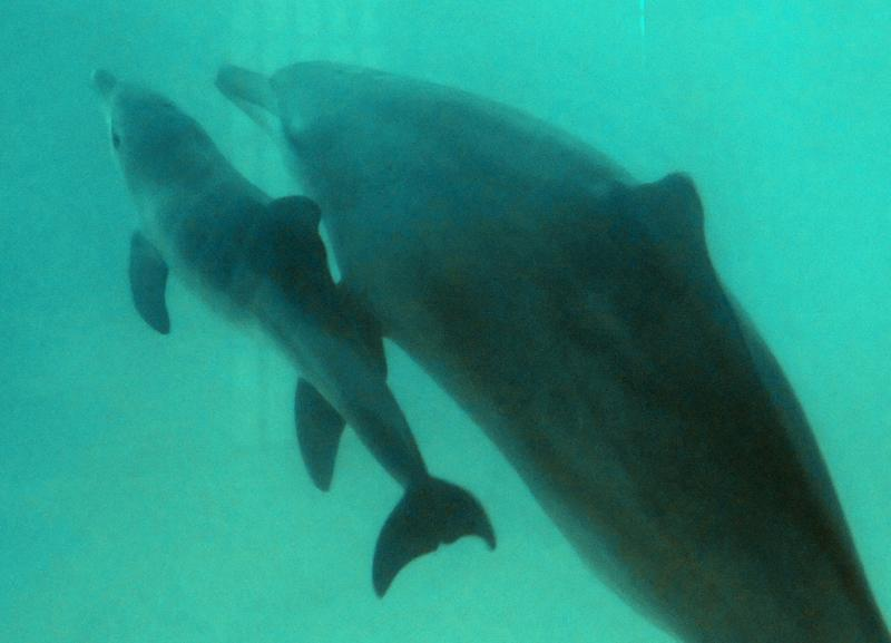 The VR dolphin therapy is designed as an alternative to dolphin-assisted therapies using dolphins in captivity (AFP Photo/BAY ISMOYO)