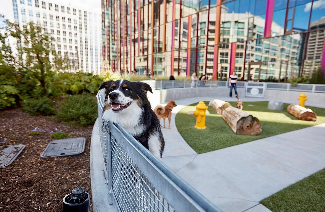 google office in seattle. Dogs Have Played An Integral Part Of Amazon\u0027s Company Culture Since The Very Beginning, Amazon Spokesperson Told Yahoo Finance. Google Office In Seattle