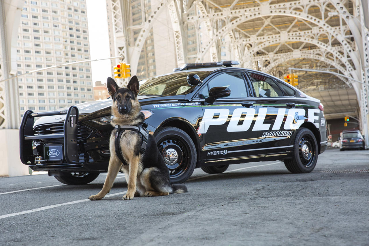 Ford Hybrid Police Car Catches Bad Guys Saves Gas Too