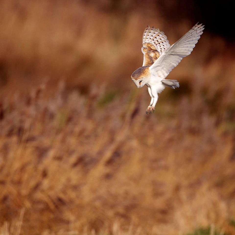Photo credit: MarkBridger - Getty Images