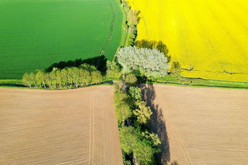 FILE PHOTO: An aerial view shows a yellow rapeseed, wheat and sugar beet fields in Carnieres