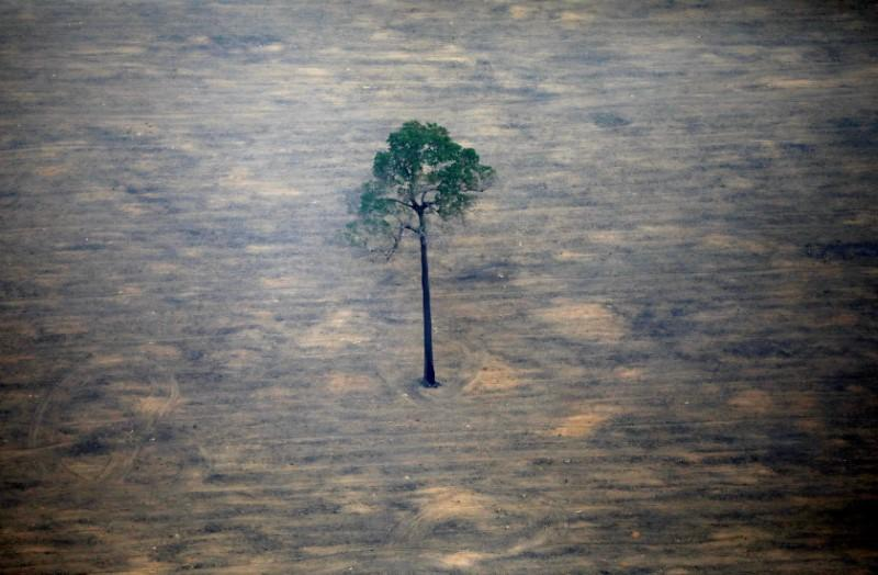 Brazil, reversing course, says will keep fighting Amazon deforestation