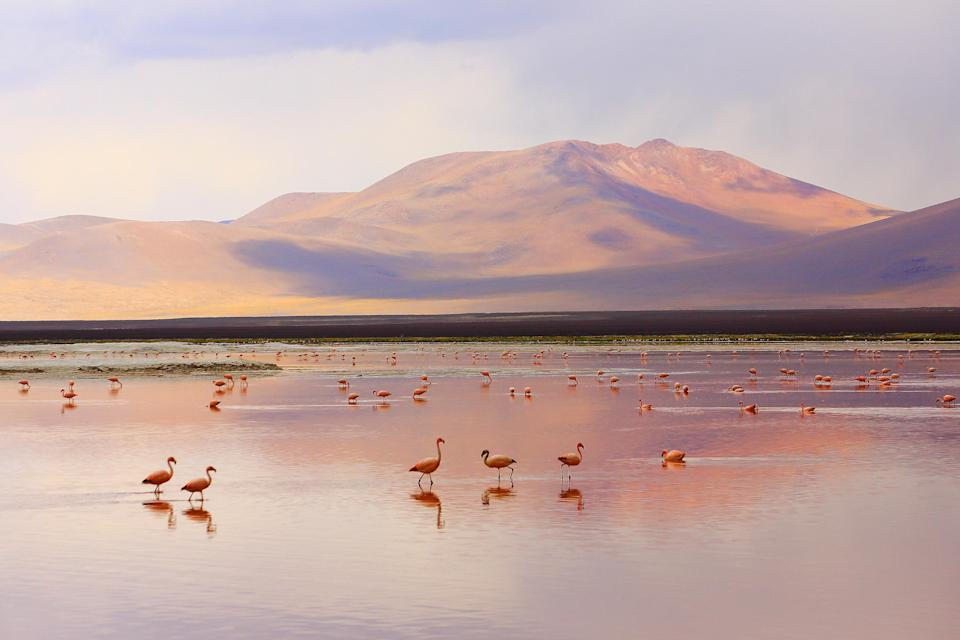 Flamingoes in Bolivia - Getty