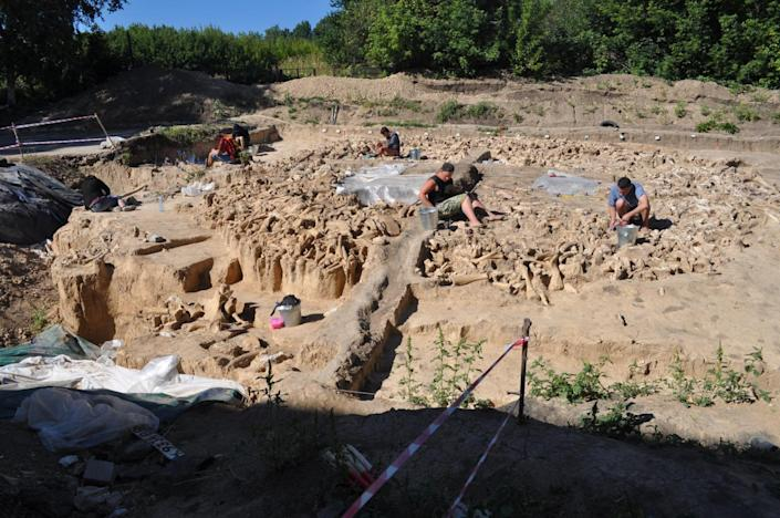 The majority of the bones found at the site in the Russian Plains are from mammoths (University of Exeter)