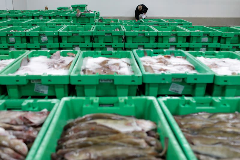 FILE PHOTO: Worker Ole Steen inspects a haul of fish caught in British waters at the Danske Fiskeauktioner, a fish auction facility in the village of Thyboron in Jutland, Denmark