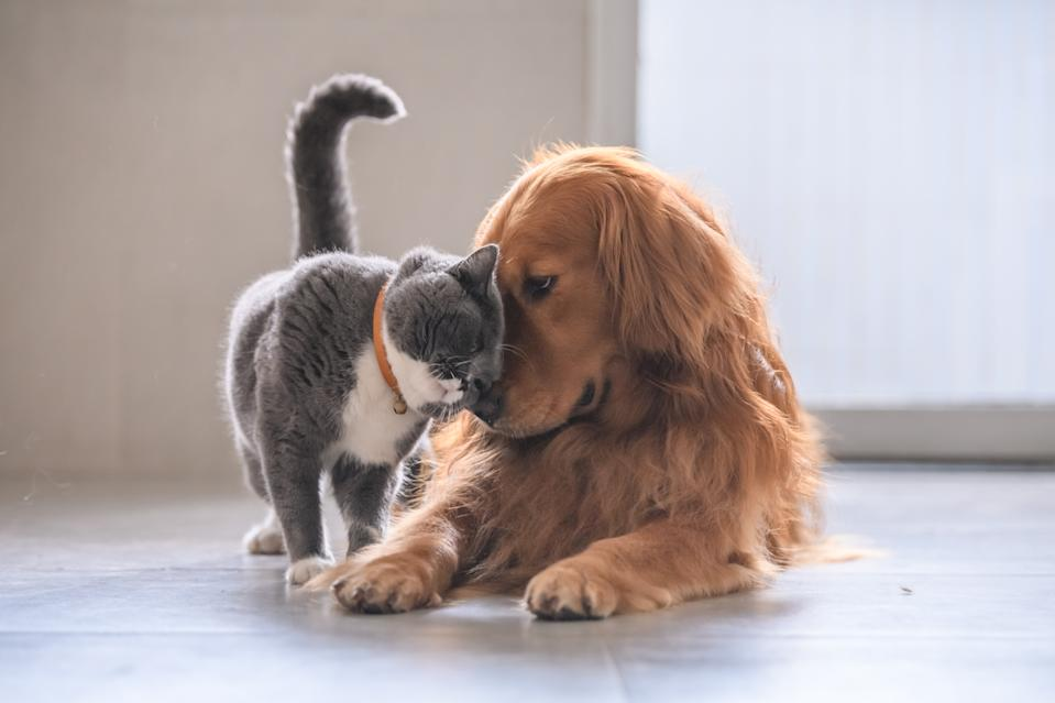 CBD market bets big on pets (<em> Courtesy: Getty Images</em>)