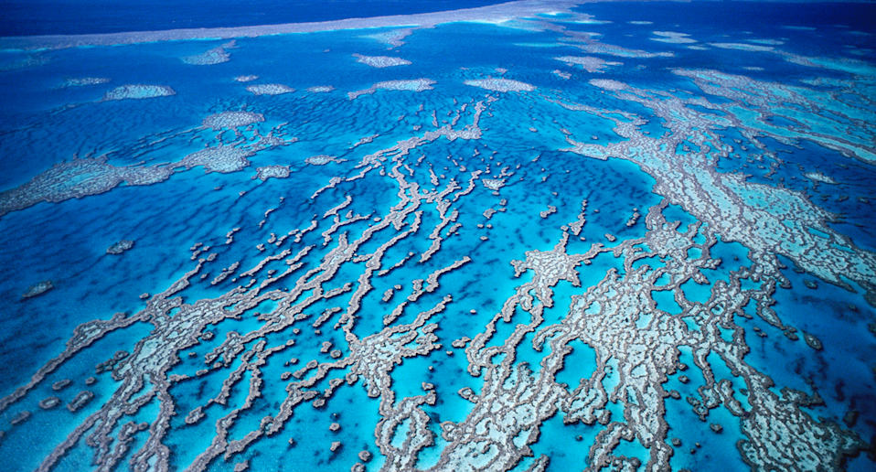 Great Barrier Reef should be listed as 'in danger', United Nations body recommends