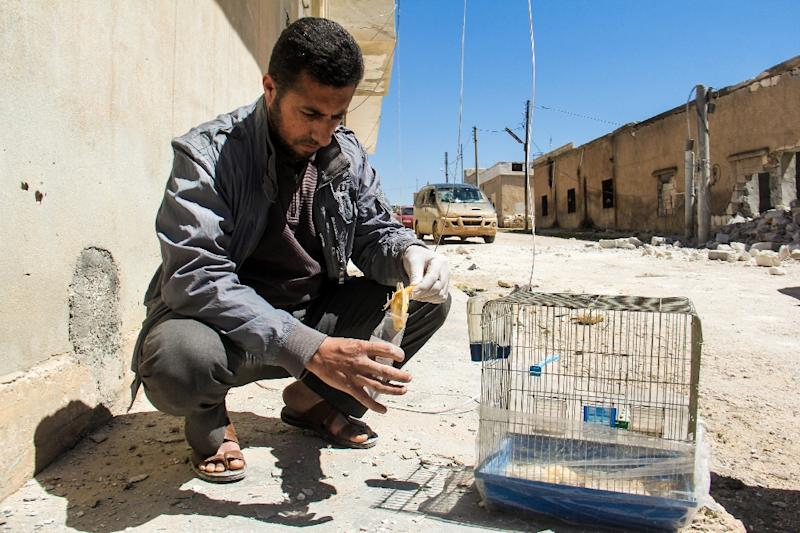 A Syrian collects the body of a dead bird, reportedly killed by a suspected toxic gas attack in Khan Sheikhun, on April 5, 2017 (AFP Photo/Omar haj kadour)