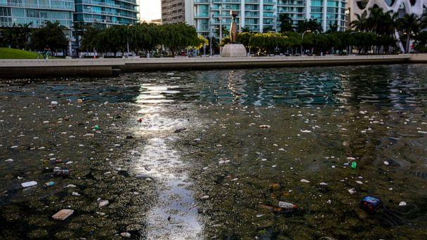 PHOTO: In this Aug. 12, 2020, file photo, trash and dead fish float on the surface of the water in Downtown Miami, on Biscayne Bay. (Daniel A. Varela/Miami Herald via AP, FILE)