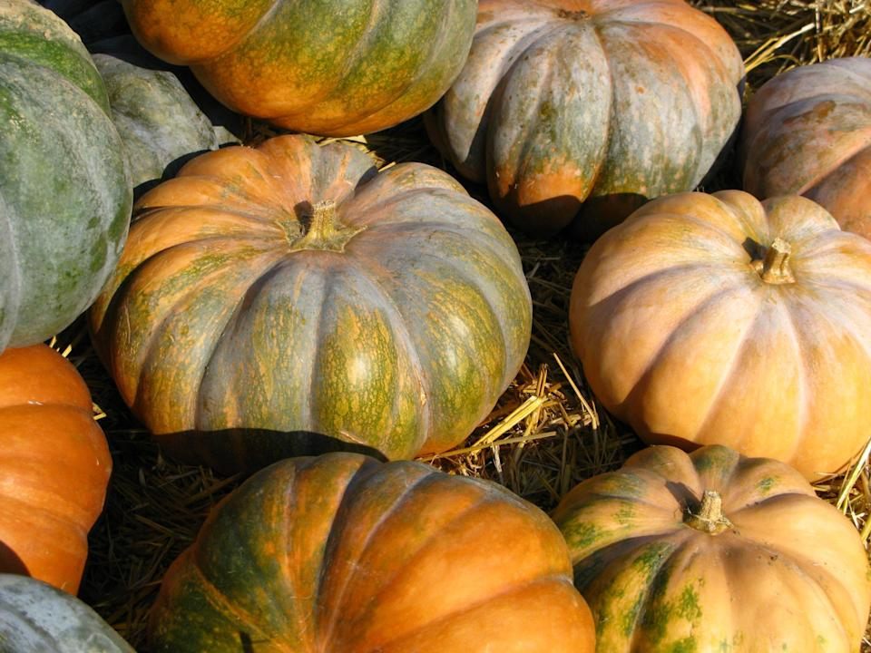 "<p>Costco swears by the variety of pumpkin that goes into their pies. It's called Dickinson and the funny thing is, it's actually more squash-y than pumpkin-y. It's tan and oblong, the flesh is harty and thick, and the flavor is much stronger than the pumpkins you'd use for <a href=""https://www.theactivetimes.com/home/pumpkin-carving-tips-ideas-jack-o-lantern-hallowee?referrer=yahoo&category=beauty_food&include_utm=1&utm_medium=referral&utm_source=yahoo&utm_campaign=feed"" rel=""nofollow noopener"" target=""_blank"" data-ylk=""slk:carving jack-o'-lanterns on fun fall days"" class=""link rapid-noclick-resp"">carving jack-o'-lanterns on fun fall days</a>.</p>"