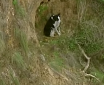 Jimmy pictured stuck on the Bells Beach cliff before he was rescued. Source: 9News