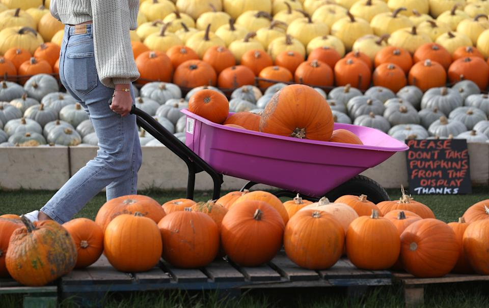 A person pushes a wheelbarrow full of pumpkins, after taking part in pumpkin picking at Sunnyfields Farm in Totton, Hampshire, ahead of Halloween. (Photo by Andrew Matthews/PA Images via Getty Images)