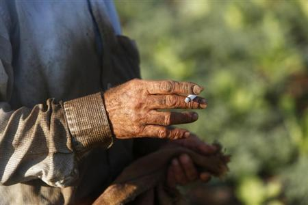 A worker smokes as he harvests tobacco leaves in a field in village near Jenin