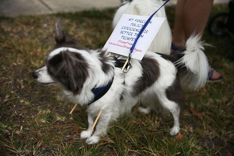 """A dog wears a sign that reads, """"My foreign policy experience is better than Trump's!!"""" as people protest against the presidential candidate before his campaign rally at the Sunset Cove Amphitheater on March 13, 2016, in Boca Raton, Florida."""