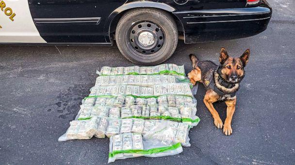 PHOTO: A California Highway Patrol officer's K9 partner Beny was able to alert the authorities to the odor of narcotics on the recovered currency after a police chase on May 1, 2020 in Merced County, California. (California Highway Patrol - Merced)