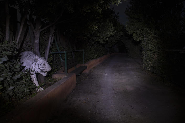 An effigy of a white tiger peers from a hedge at the Attica Zoological Park in Spata, near Athens, on Thursday, Jan. 21, 2021. (AP Photo/Petros Giannakouris)