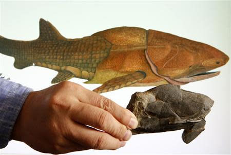 Min Zhu, professor at the Chinese Academy of Sciences' Institute of Vertebrate Paleontology and Paleoanthropology, shows a fossil of the heavily armoured fish, Entelognathus primordialis, in front of a computer screen showing a life restoration image of the fish during a photo opportunity at his laboratory in Beijing September 27, 2013. REUTERS/Kim Kyung-Hoon