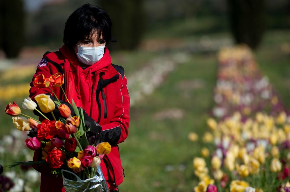 An Italian red cross volunteer wearing a sanitary mask to protect against the novel coronavirus (COVID-19) picks tulip flowers to be offered to medical staff in the Roma flowers park in Rome on April 8, 2020. - Roma Flowers Park and Interflora have donated bouquets of tulips to the Red Cross to be offered to volunteers, doctors and nurses to thank them for their efforts during the COVID-19 crisis. (Photo by Tiziana FABI / AFP) (Photo by TIZIANA FABI/AFP via Getty Images)