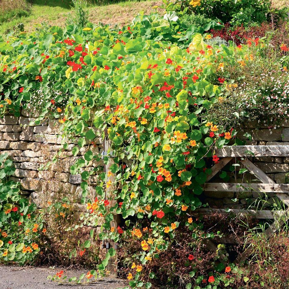 Photo credit: Glorious Gardens, by Country Living| EWA Stock, Shane Aurousseau