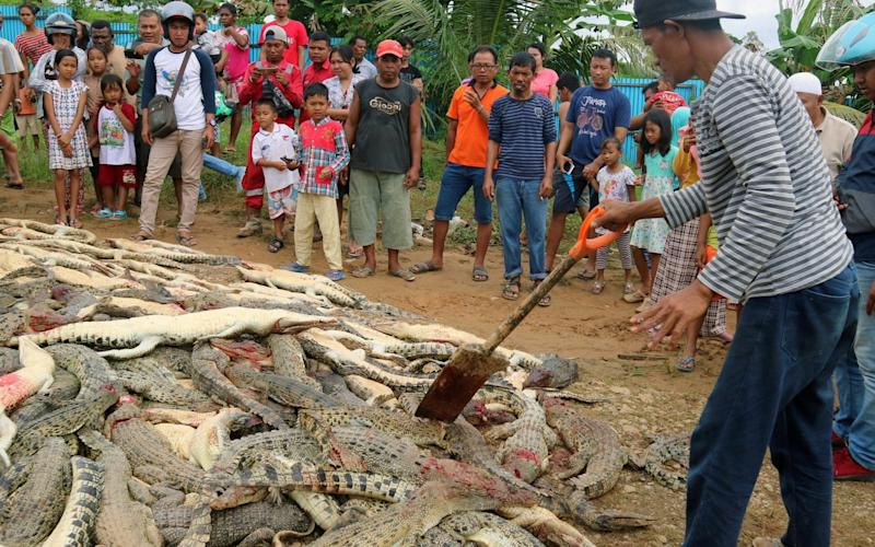 After a man was killed on Saturday, villagers entered a crocodile farm and killed all the crocodiles - REUTERS