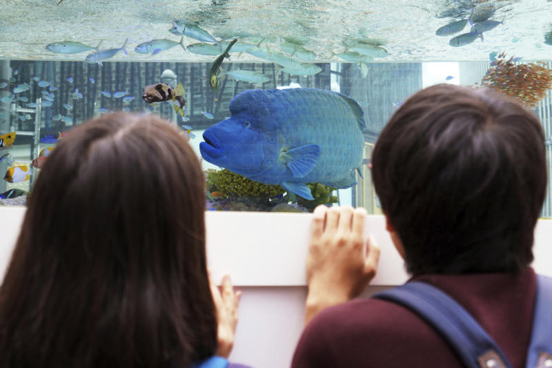 """FILE - In this Tuesday, Aug. 28, 2018 file photo, passers-by look at fish swimming in a large tank displayed in the Ginza shopping district of Tokyo. On Friday, Feb. 21, 2020, The Associated Press reported on stories circulating online incorrectly asserting that amoxicillin used for fish in aquariums is the same as using amoxicillin prescribed by a doctor, just less expensive and does not require a prescription. Discussing people taking fish antibiotics, Mark Papich, a clinical pharmacology professor in the college of veterinary medicine at North Carolina State University says, """"We have been frustrated about this for a long time. … We have no idea the level of potency, the quality or an expiration date. We don't know what other types of contaminants might be in it.""""  (AP Photo/Eugene Hoshiko)"""