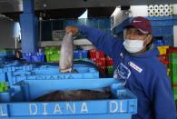Fisherman José López, shows a piece of squid in Pucusana, Peru, Monday, Sept. 20, 2021. Fishing has been a way of life for López and dozens of other artisanal fishermen in Pucusana, a port carved from the barren, desert-like hills south of Peru's capital. But a decade ago the tuna that he once effortlessly caught vanished. So, the fishermen turned their boats to squid. Now they face a new threat: China's distant water fishing fleet. (AP Photo/Martin Mejia)