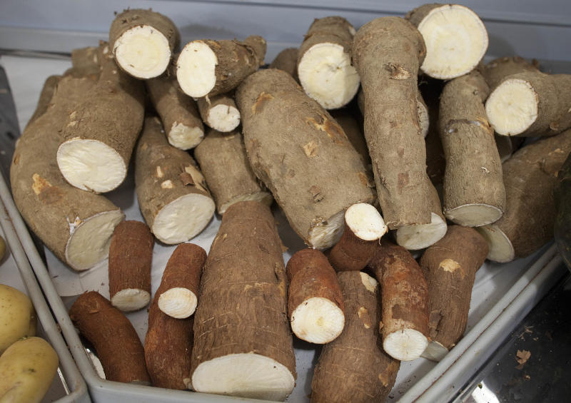 Manioc roots of various shapes and sizes are displayed in a supermarket in Sao Paulo, Brazil, Monday, Dec. 17, 2012.  Grown in some 80 countries worldwide and known internationally as yuca, cassava or mogo, manioc has its origins in Brazil: It was the main food source for indigenous tribes since before the discovery of the New World. Even now, manioc remains an important source of carbohydrates, especially among Brazil's working class, who grind it into a rich, nutty flour or deep-fry it into greasy fries. (AP Photo/Andre Penner)