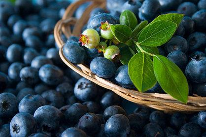"""<p>A <a href=""""http://health.usnews.com/health-news/diet-fitness/slideshows/8-superfoods-and-their-alternatives"""">superfood</a> rich in antioxidants, blueberries reduce oxidative stress on the brain and have been shown to improve learning capacity and motor skills. """"Phytochemicals give fruits and vegetables their color,"""" says Kristin Kirkpatrick, an <a href=""""http://www.usnews.com/topics/author/kristin-kirkpatrick"""">Eat + Run blogger</a> and manager of wellness nutrition services at Cleveland Clinic's Wellness Institute. """"Foods high in these chemicals have the most effective means of improving your health, and blueberries have one of the strongest concentrations available.""""<br /></p><p><i>(Photo: iStock) </i></p>"""