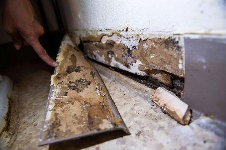 FILE PHOTO: Leanne Bell, 39, displays mold-lined baseboards at the army base housing allocated to her family in Fort Hood, Texas, U.S. May 16, 2019. Bell and her family say they began suffering breathing issues, depression, hair loss, and rashes while living in the home. They contacted housing maintenance repeatedly, submitting between 2 to 3 dozen work orders related to mold, HVAC, and air issue quality concerns over the course of 3 years. REUTERS/Amanda Voisard
