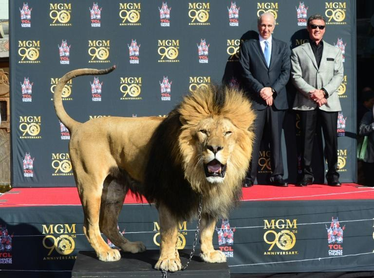 MGM's official mascot is Leo the Lion, pictured here with Sylvester Stallone (right) and MGM Chairman and CEO Gary Barber at a Hollywood ceremony the studio's 90th anniversary in 2014