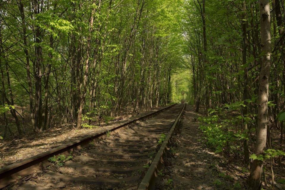 <p>This tunnel is actually still used today - trains chug through it three times a day to deliver wood to a factory. It's believed that if couples who are truly in love hold hands and cross the tunnel, their wishes will come true. </p>