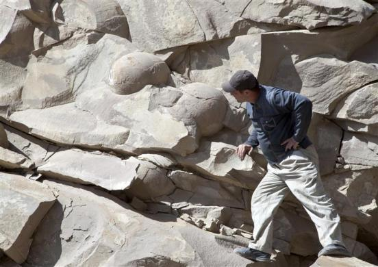 A man looks at what is believed to be fossilized dinosaur eggs at a site in Russia's volatile Chechnya region April 14, 2012. The find was uncovered when a construction crew was blasting through a hillside to build a road near the region's border with former Soviet Georgia in the Caucasus Mountains. Geologists in Russia's volatile Chechnya region have discovered what they believe to be fossilized dinosaur eggs laid by one of the huge extinct reptiles that roamed the Earth more than 60 million years ago.