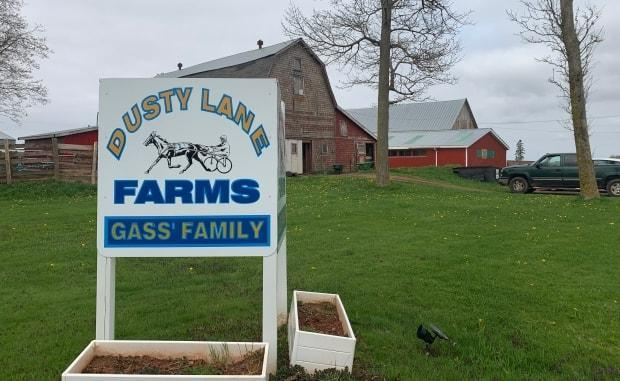 Dusty Lane Farms in Cornwall is one of P.E.I.'s largest standardbred breeding operations, with two dozen mares and two studs.