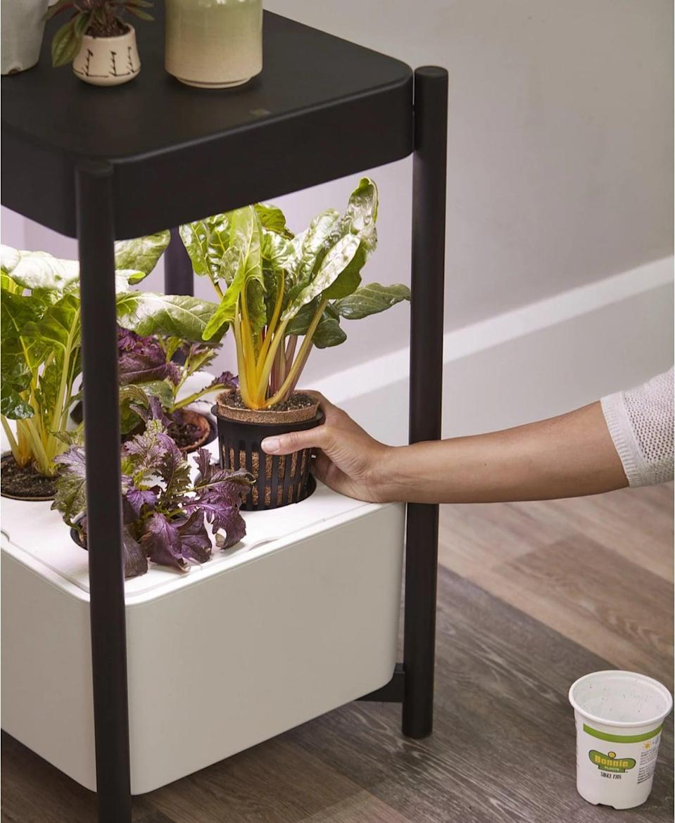 <p>The <span>Miracle-Gro Twelve Indoor Growing System</span> ($254, originally $299)is an all-in-one system, specially designed for growing a wide variety of leafy greens, herbs, and flowers like lettuce, kale, mint, basil, and marigolds indoors. The water-based system helps nutrients go straight to the roots, providing for a faster growing cycle.</p>