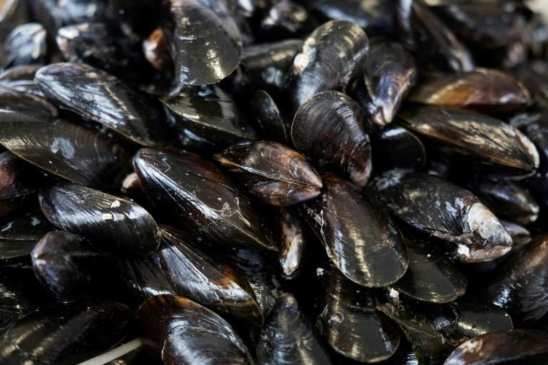 Like canaries in a coal mine, mussels have long been used as 'bio-indicators' of the health of the seas, lakes and rivers they inhabit