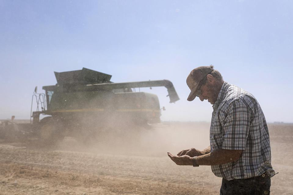 Phil Fine checks for carrot seeds in the soil left behind by a combine while harvesting a field in the North Unit Irrigation District on Tuesday, Aug. 31, 2021, near Madras, Ore. Oregon farmers who grow 60% of the world's carrot seed have been without irrigation water for weeks as drought ravages the American West. But just down the road, sprinklers douse crops and cattle graze in green pastures. The stark contrast is a consequence of the West's arcane water law, and it's brought new urgency to efforts to share the resource along Oregon's Deschutes River. (AP Photo/Nathan Howard)
