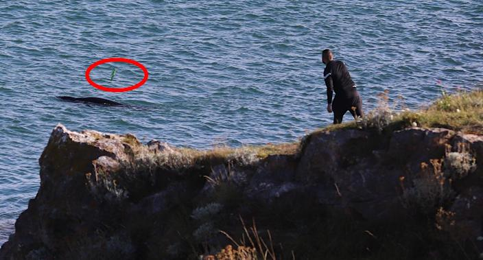 A charity says a bottle hit a seal on the back (Duncan Kenny)