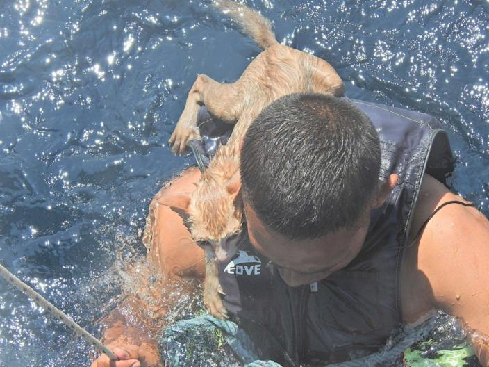 <p>A Thai navy officer swims with a rescued cat on his back in the Andaman Sea on 2 March</p> (Reuters)