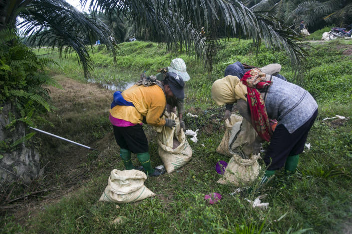 Women fill sacks with fertilizer to be spread in a palm oil plantation in Sumatra, Indonesia, Nov. 14, 2017. Many large suppliers have pledged to root out labor abuses after pressure from buyers who have denounced it. But some workers said they are told to hide or are coached on what to say during auditors' scheduled visits to plantations, where only the best conditions are often showcased to gain sustainability certification. (AP Photo/Binsar Bakkara)