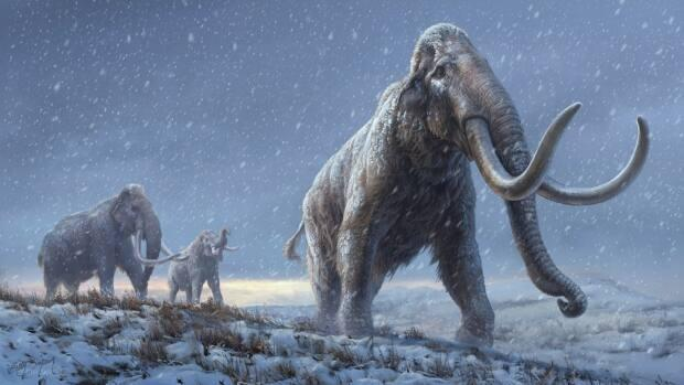 An artist's reconstruction shows the extinct steppe mammoth. It's believed to be an evolutionary predecessor to the woolly mammoth that flourished during the last Ice Age. (Beth Zaiken/Centre for Palaeogenetics via REUTERS - image credit)