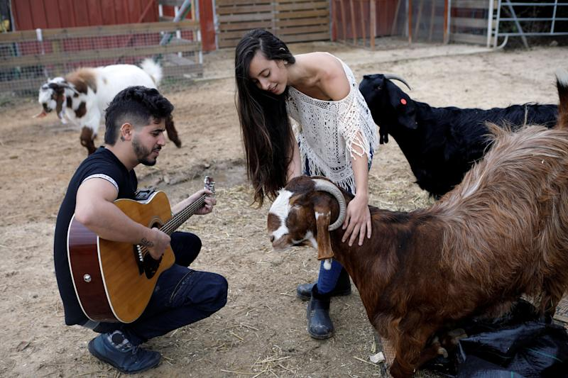 """A volunteer plays guitar as another pats a goat at """"Freedom Farm"""" which serves as a refuge for mostly disabled animals in Moshav Olesh, Israel. (Photo: Nir Elias/Reuters)"""