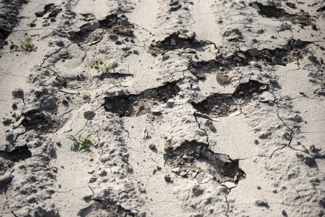 Footprints that have broken dry dirt in a field near McAllen, Texas. (Photos: Sergio Flores for Yahoo News)