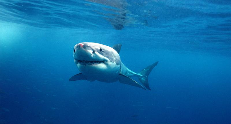 Man escapes shark's jaws after punching predator in the head