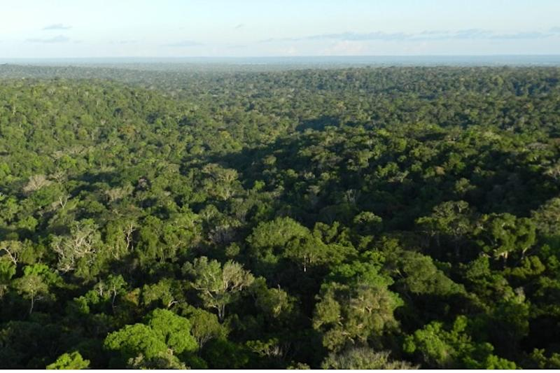 Brazil President Imposes 4-month Ban on Setting Agricultural & Forest Fires to Preserve Amazon