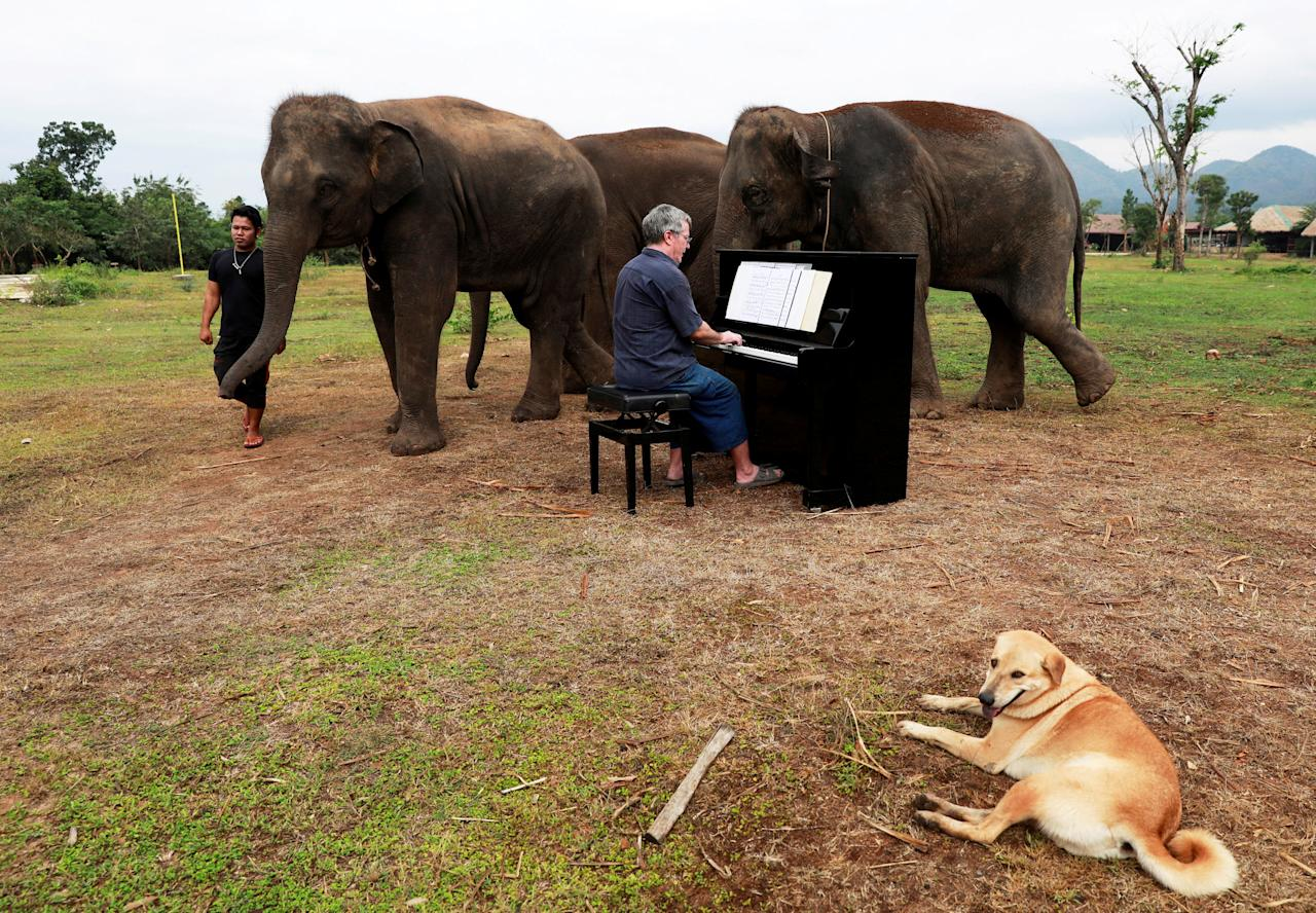 British volunteer Paul Barton plays piano for sick, abused, retired and rescued elephants in sanctuary along Thailand-Myanmar border in Kanchanaburi, Thailand, December 9, 2018. Paul has been playing piano for elephants as a volunteer for almost ten years. REUTERS/Soe Zeya Tun      TPX IMAGES OF THE DAY