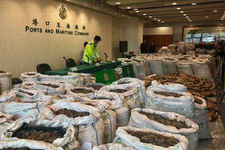 Ivory tusks and pangolin scales seized by Hong Kong Customs are seen at a news conference in Hong Kong, China, February 1, 2019. REUTERS/Stringer  NO RESALES. NO ARCHIVE.