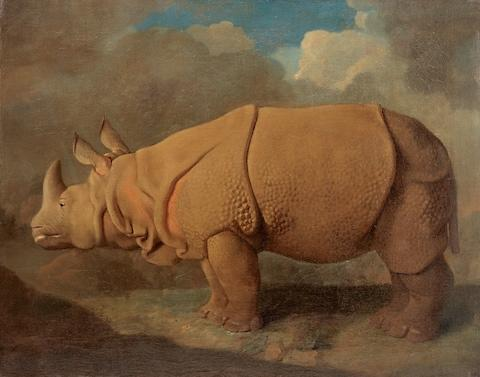 Rhinoceros, c.1790–1792 - Credit: © Royal College of Surgeons of England