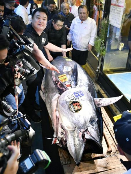 A 276-kilogram bluefin tuna that was auctioned for 193 million Japanese yen (about $1.8 million) is displayed after the first tuna auction of the New Year, a a sushi restaurant in Tokyo