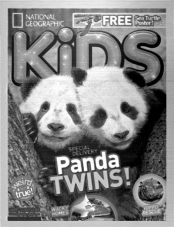 An 11x14-micrometer image of two pandas that appeared on last month's cover of the National Geographic Kids magazine that scientists carved the onto a polymer using technology similar to 3D printing is seen in a handout photo.